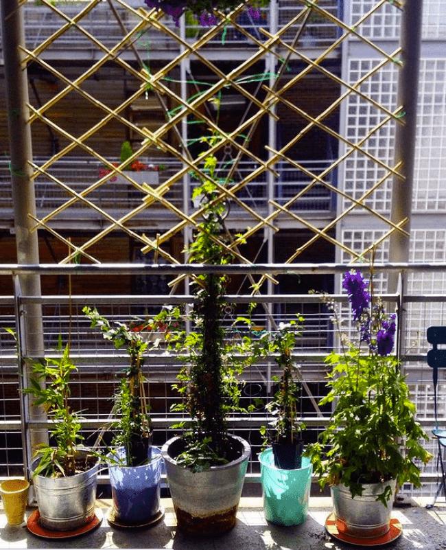 DIY bamboo balcony trellis
