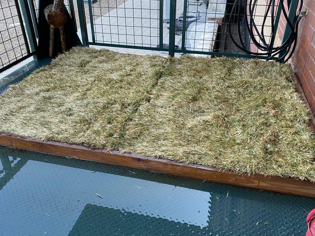 DIY real grass dog potty